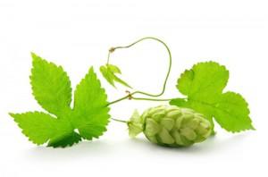 summer-beer-lovers-festival-sblf-houblon